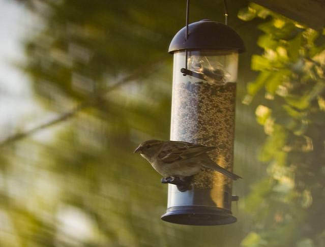 Bird Fed