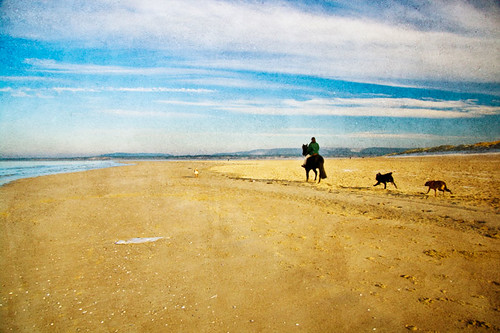 winter sea sky horse france max beach dogs water clouds sand running follow riding northsea normandie rider normandy nordpasdecalais channel following letouquet letouquetparisplage canoneos400d artlibre memoriesbook andreeagerendy magicdonkeysbest