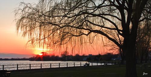sunset canada tree quebec 1001nights lachine stlawrenceriver fleuvestlaurent anawesomeshot colorphotoaward theunforgettablepicture astoundingimage dragondaggerphoto thenewselectbest