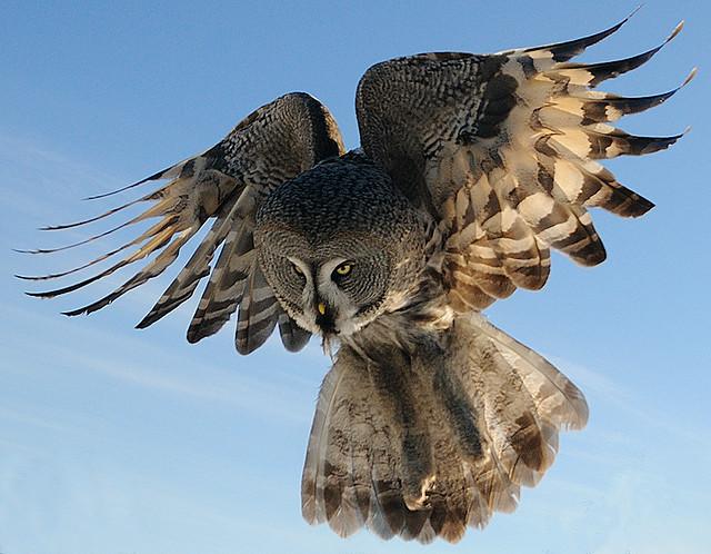 Lentäen...(etelään toviksi)