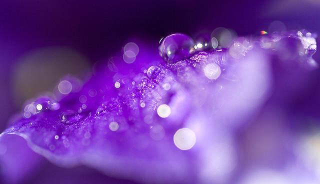 Iris and Raindrops2