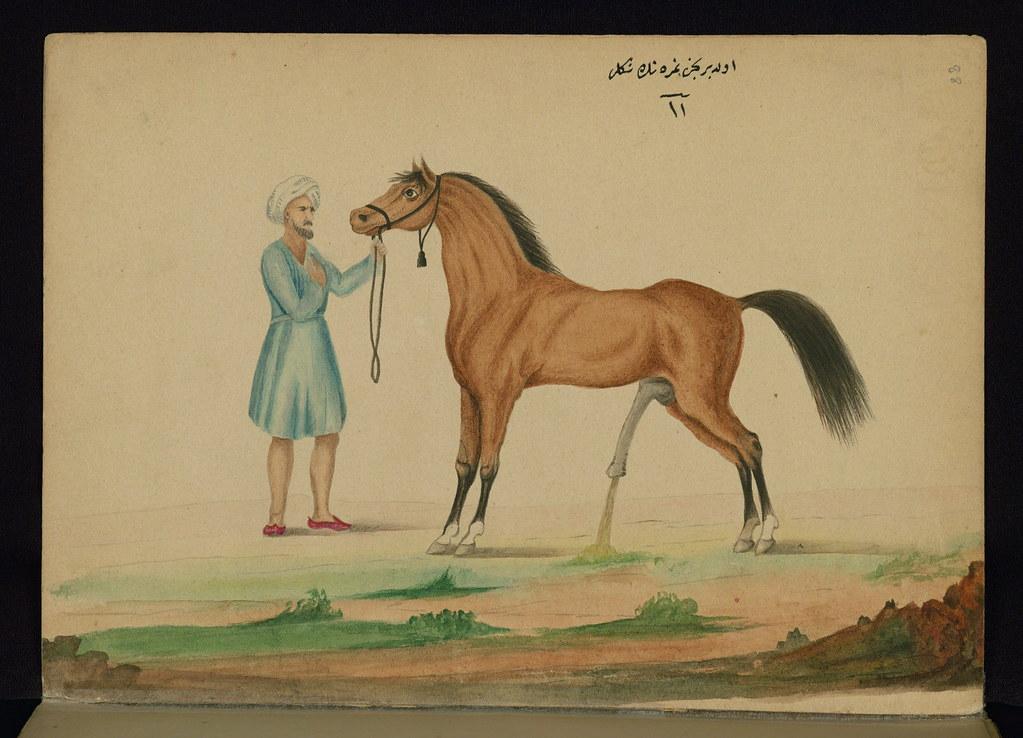 Dick horse Horse Body
