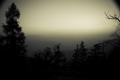 trees sun india mist mountains nature fog sunrise early hills himalayas mussoorie uttarakhand nikond40