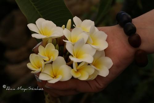 La mano florida
