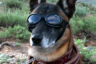 Doggles for military working dog | by The U.S. Army