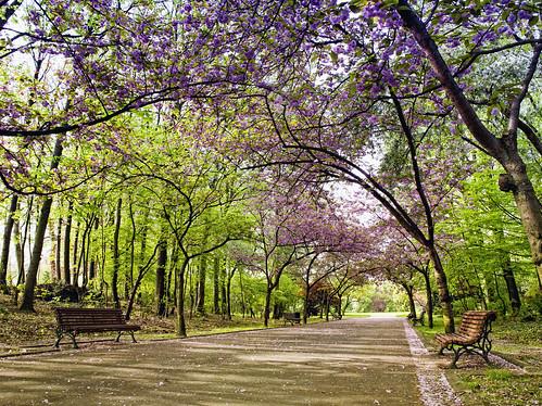 Tree-lined road in a public garden