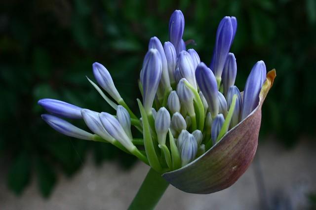 Las flores_IMG_4529
