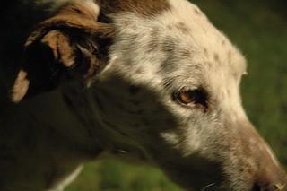 dog | by tsaiberia