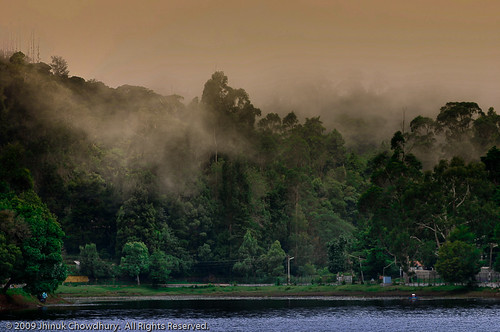 trees india mist lake nature water clouds landscape f5 tamilnadu kodaikanal