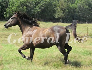 General enjoying new pasture 2 | by dolittlethings09