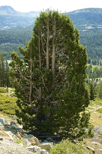 california trees usa mountains landscape nikon outdoor nikond70s roadtripusa sierras dslr sierranevadamountains highway88 statehighway88