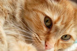 Close up | by Judith (Kozmica)