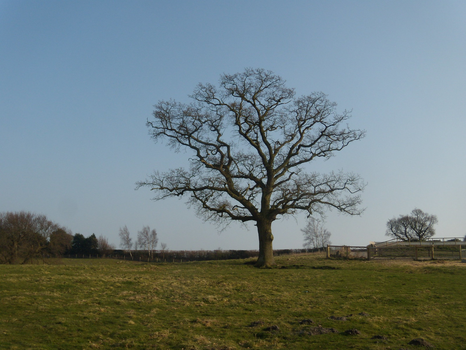 Tree Rye Circular