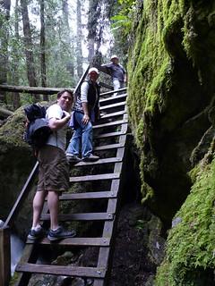 Steep Ravine Ladder