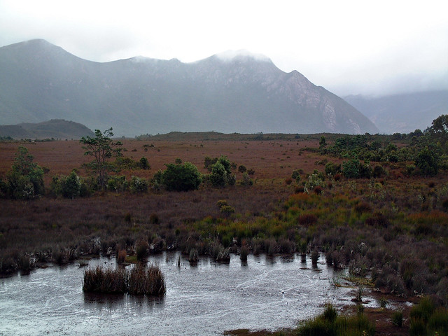 Buttongrass marsh, Tasmania