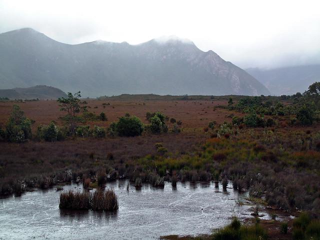 Buttongrass marsh, Tasmania