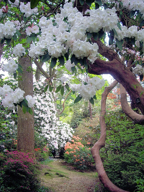 Through Top Walk, Leonardslee Gardens