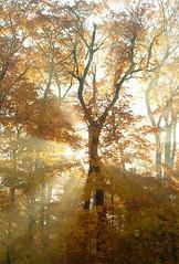 light through trees   by megabanjo2017