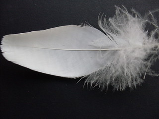 Feather | by Mundoo