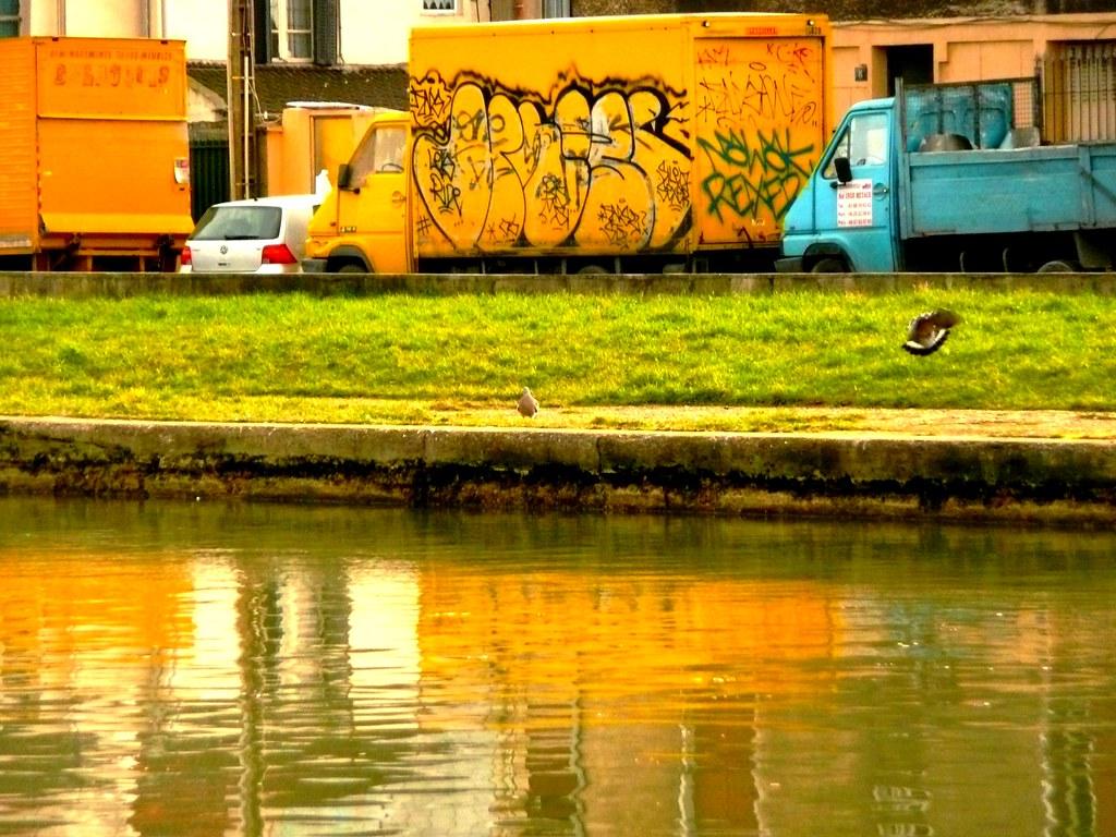 Camions et oiseaux