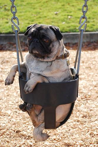 dogs like swings too