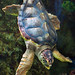 This turtle was in the aquarium at the Riverbanks Zoo in Columbia. It was one of the pictures I took while on the CNPA Upstate region outing there on Saturday.