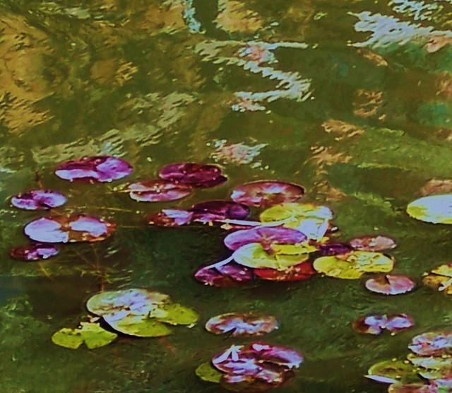 Monet Tribute