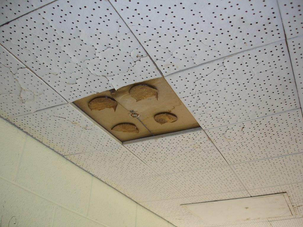Ceiling Tile Asbestos Adhesive Glue Pods Non Asbestos 12