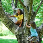 Carter and Ada in tree 2