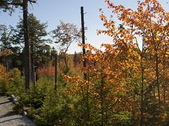 Hemlock Ravine