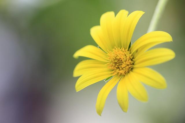 cheerful yellow.
