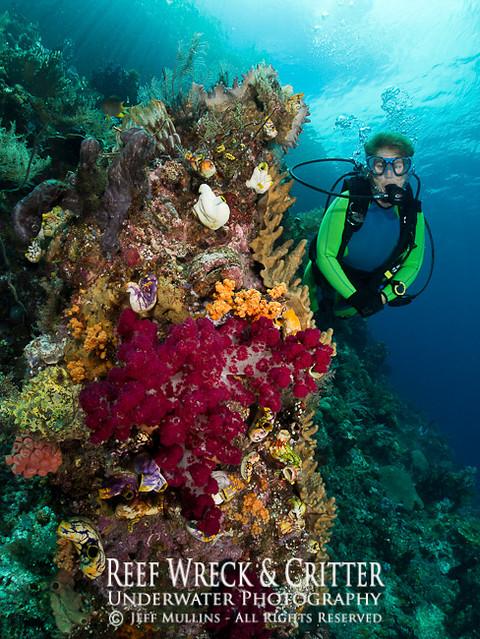 Shallow Reef Scene - Fam Island