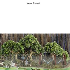 Krew Bonsai Dagobah