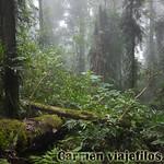 07 Viajefilos en Australia. Dorrigo Rainforest NP 04