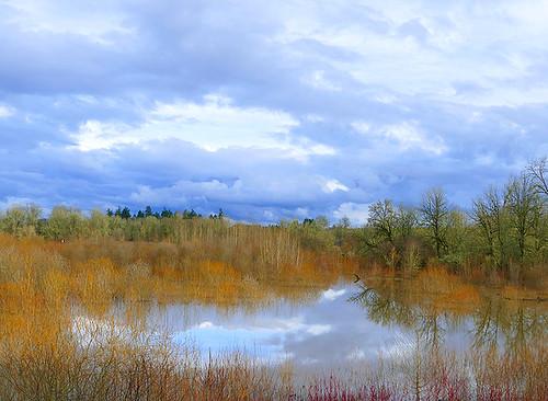 water reflections clouds blue trees marsh jacksonbottomwetlandpreserve landscape lake
