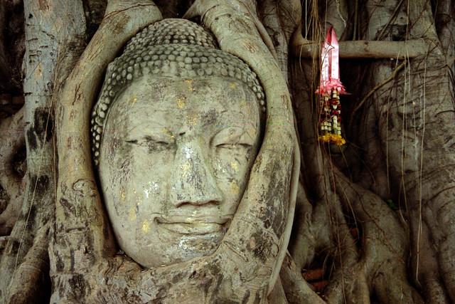 Buddha in a Tree, Ayutthaya, Thailand