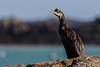 Shaggy bird by Pascal Bernardin