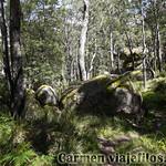 06 Viajefilos en Australia. Cathedral Rock NP 10