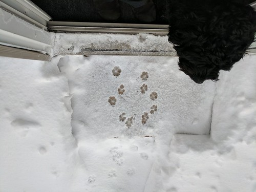 Puppy paw prints in the snow. | by kasnj