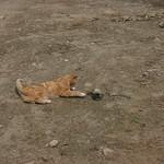 Orange cat, black snake