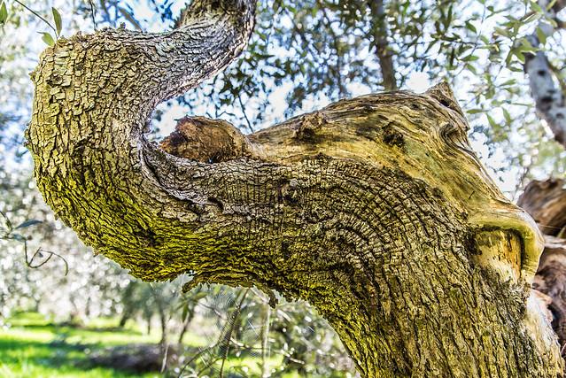 Treelephant natural reflections