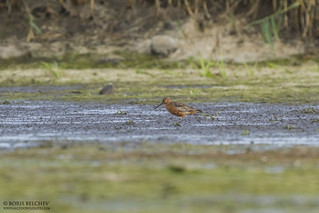 Wader Quest 2015 Day 1 | by _alcedo_