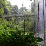 07 Viajefilos en Australia. Dorrigo Rainforest NP 44