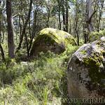 06 Viajefilos en Australia. Cathedral Rock NP 31