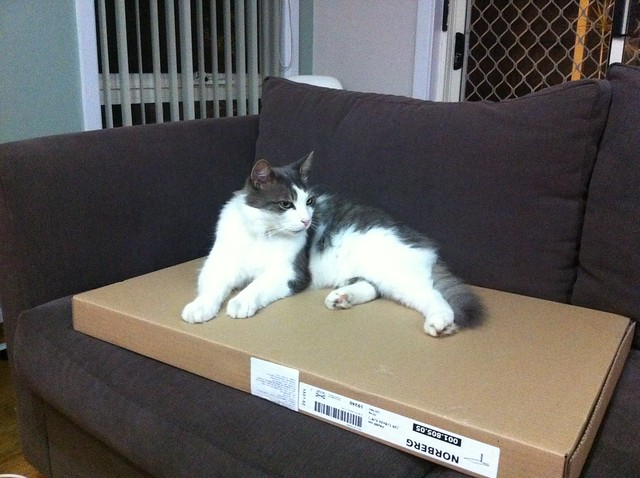 helping build the flat pack furniture