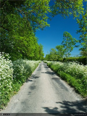 A Country Road in Summer