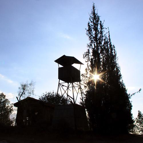 sunset tower forest tour foret coucherdusoleil