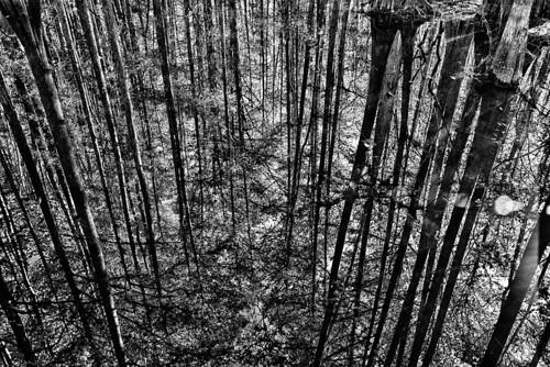 trees cypress hdr floridastatepark cypressswamp highlandscountyflorida ericseibert