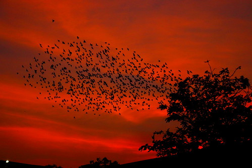 sunset beautiful starling eveningsky