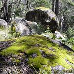 06 Viajefilos en Australia. Cathedral Rock NP 33